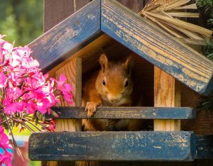 squirrel house