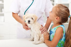 Child and dog at veterinarian's office